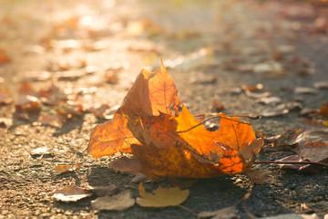 Pomarańczowy liść klonu. Jesienny liść.