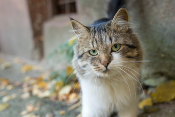 Cat with green eyes on the street in autumn