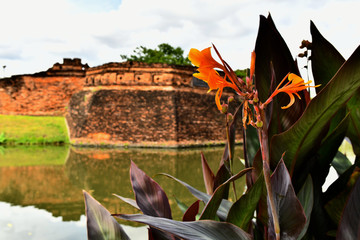Canna sp. - Flowers along the Moat in Chiang Mai