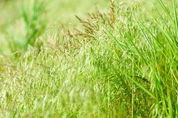 natural green grass.