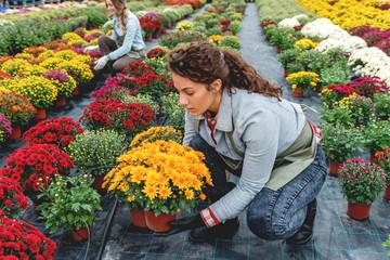 Beautiful gardener in flower feild