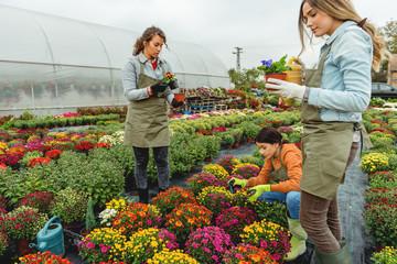 Garden team working in greenhouse