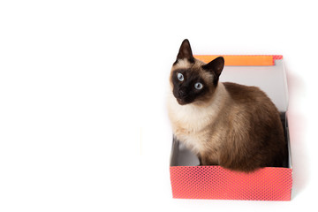cat sitting in a color box isolated on white background. cardboard box with a cat
