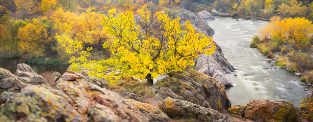 panoramic view to canyon with river and yellow tree on the rocks
