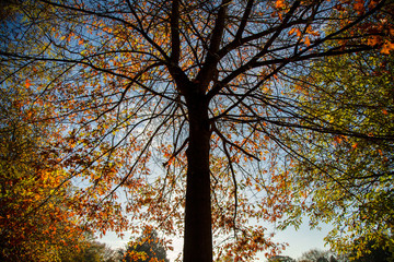 Slhouetted tree against autumn leaves and blue sky