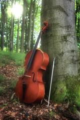 Streichinstrument an einem Baum gelehnt