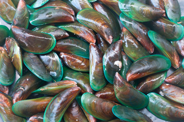 Beautiful green mussel texture background