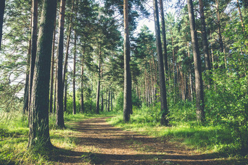 Pathway through beautiful forest with different trees