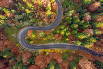 Curved winding road surrounded by forest in the Carpathian Mountains
