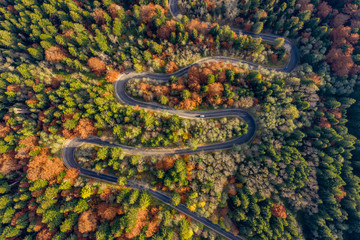 Winding road trough the forest in the autumn. Aerial photography