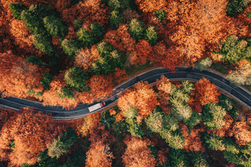 Printed roller blinds Gray traffic Winding road in the forest in the fall with truck on the road