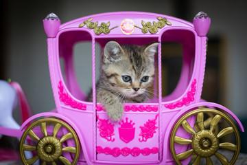 Prinzessin, Baby Katze, Katze