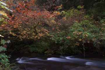 Long exposure photographs of rolling river with fall foliage