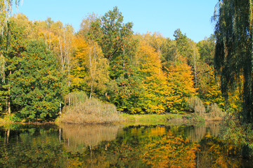 Wall Mural - colorful trees growing on the bank of the lake in autumn on sunny day, Czech Republic