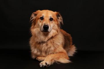 beautiful mixed dog portrait in the studio