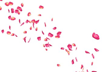 The petals of a red rose fly far into the distance