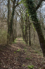 Une forêt en hiver