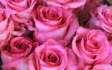 Texture with bright pink roses.