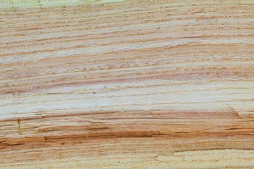 Oak Cross Section