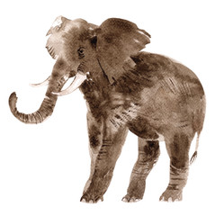 Watercolor elephant isolated on a white background