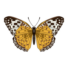 butterfly  vector illustration flat style front side