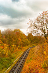 The railway in autumn forest