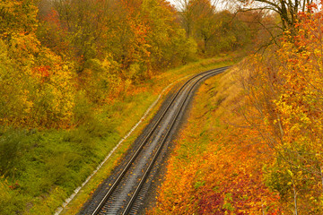 Railway leaving in the autumn forest.