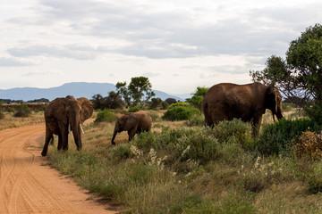 Elephants in Kenya, Africa