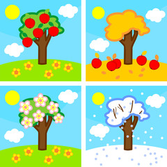 Four seasons apple tree. Life cycle of tree