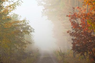 Keuken foto achterwand Bos in mist Misty morning in autumn forest.