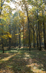 Autumn landscape. Golden trees in the autumn park