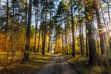 Keuken foto achterwand Weg in bos Beautiful autumn landscape. Road through the autumn mixed forest.