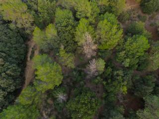 Camino de bosque en Cataluña