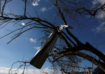 A piece of fallen sheet metal is seen on a tree in the town of Teacapan near the southern tip of Sinaloa state