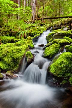 A small cascade flowing near Sol Duc Falls, Olympic National Forest, Washington, USA
