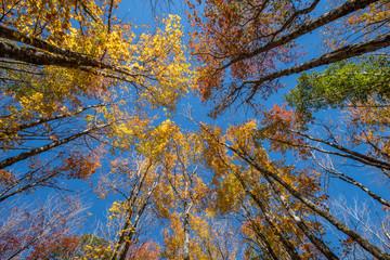 Foto op Canvas Aan het plafond Autumn Trees