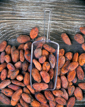 Detail of dried cacao beans on a scoop