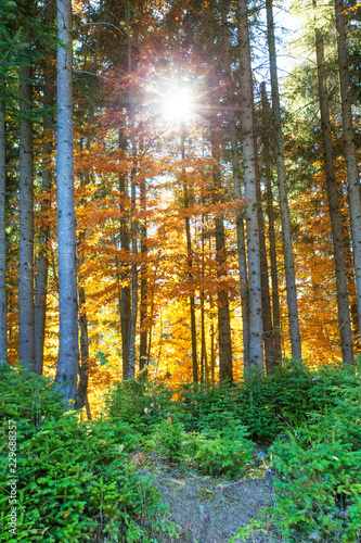 Autumn Forest On Sunny Day Stock Photo And Royalty Free Images On