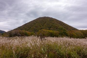 榛名山ゆうすげの道