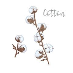 Cotton branches hand drawn vector illustration