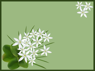 two groups of small white flowers on green background
