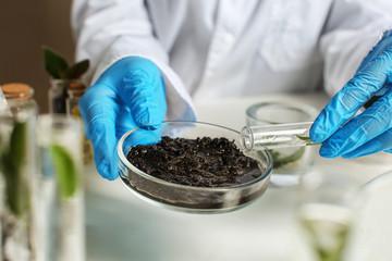 Fototapeta Scientist working with soil in laboratory obraz