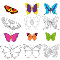 butterfly, coloring book