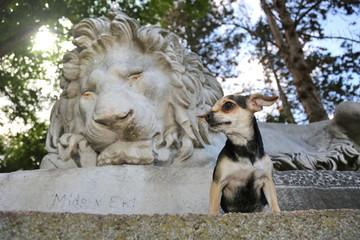 Kleiner Hund vor Skulptur eines Löwen
