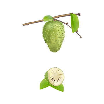 Soursop with leaf
