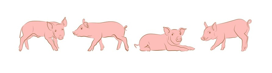 cartoon pigs on an isolated white background