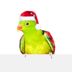 Red-Winged Parrot (Aprosmictus erythropterus)in red christmas hat over white banner. isolated on white background