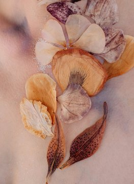 Conceptual beauty portrait of a woman with dried flowers on her face