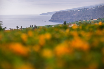 Beautiful landscape of cliffs and ocean in background taken with defocused firts plane with orange flowers