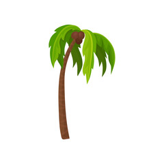 Palm tree with ripe coconut fruits, green leaves and brown trunk. Tropical plant. Flat vector for poster of travel agency